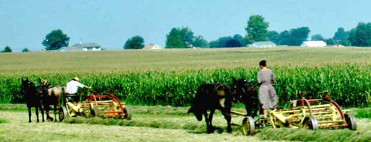 Amish Field Work 1